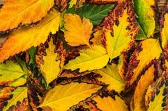 在木背景的美好的秋天构成 免版税库存图片