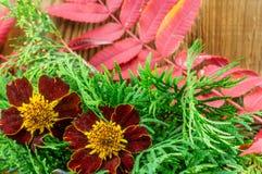 在木背景的美好的秋天构成 免版税库存照片