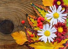 在木背景的美好的秋天构成 库存照片