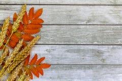 在木背景的花揪 免版税库存照片