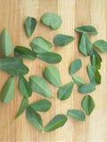 在木背景的葫芦巴叶子 免版税图库摄影