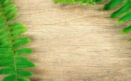 在木背景的蕨叶子 免版税库存图片