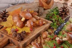 在木背景的蘑菇牛肝菌蕈类 秋天蘑菇 牛肝菌蕈类可食在木背景,关闭在木土气桌上 免版税库存照片