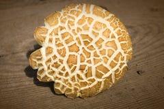 在木背景的蘑菇牛肝菌蕈类 免版税库存图片