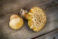在木背景的蘑菇牛肝菌蕈类 库存照片