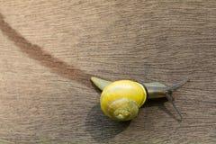 在木背景的蜗牛trrack 图库摄影
