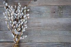 在木背景的褪色柳 愉快的复活节 免版税库存图片