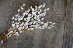 在木背景的褪色柳 愉快的复活节 免版税图库摄影