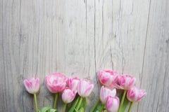 在木背景的郁金香 免版税库存照片