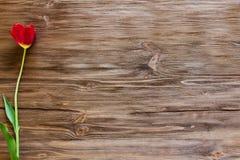 在木背景的郁金香 免版税库存图片