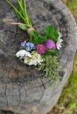 在木背景的野花 免版税库存图片