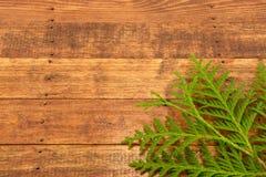 在木背景的金钟柏叶子 免版税库存图片