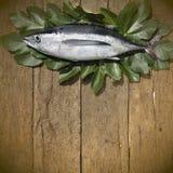在木背景的长鳍金枪鱼 免版税图库摄影