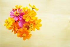 在木背景的顶视图美丽的黄色波斯菊花 免版税库存照片