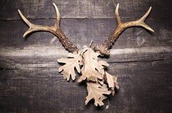 在木背景的鹿鹿角 库存照片