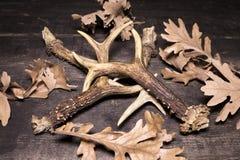 在木背景的鹿鹿角 免版税库存照片