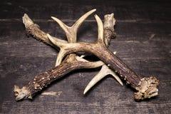 在木背景的鹿鹿角 免版税库存图片