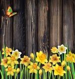 在木背景的黄水仙花 库存例证