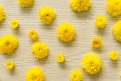 在木背景的黄色菊花,自由空间 库存图片