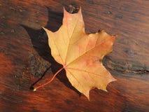 在木背景的黄色叶子 库存图片
