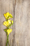 在木背景的黄色小苍兰花 免版税图库摄影