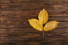 在木背景的黄色核桃叶子 免版税库存照片