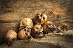 在木背景的头骨 免版税库存照片