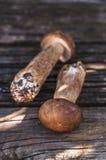 在木背景的Porcini蘑菇 库存图片