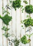 在木背景,拷贝空间的各种各样的新鲜的绿色厨房草本 免版税库存图片