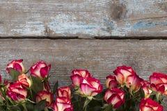 在木背景,拷贝空间的红色和黄色玫瑰 库存照片