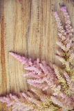 在木背景,拷贝空间的精美植物布置 库存照片