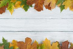 在木背景,文本的拷贝空间的五颜六色的秋叶 顶视图 免版税库存照片