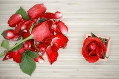 在木背景,葡萄酒减速火箭的题材的红色玫瑰 免版税图库摄影