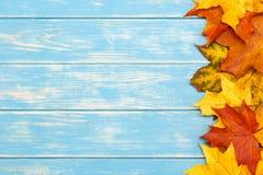在木蓝色背景的右边秋叶 库存图片