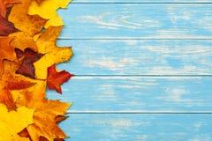 在木蓝色背景的左边秋叶 库存照片