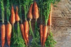 在木表上的新鲜的被收获的红萝卜在庭院里 菜维生素角质素 自然有机红萝卜在木背景说谎 库存图片