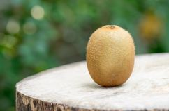 在木表的猕猴桃 库存照片