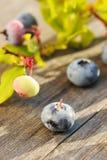 在木表的蓝莓 库存照片