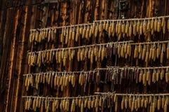 在木谷仓的玉米 库存图片