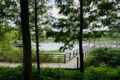 在木质的湖边的被操刀的和planked人行桥在云彩城市 免版税库存照片