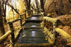 在木走道附近的青苔在秋天口气的雨林里 免版税库存图片