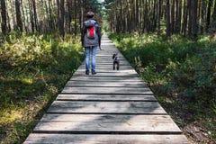 在木路的妇女走的狗在森林 免版税图库摄影