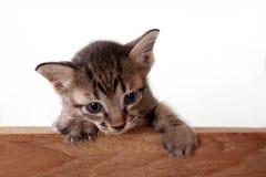 在木边的小猫 图库摄影