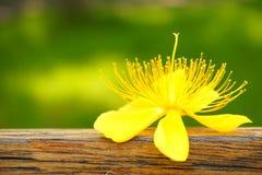 在木酒吧和绿草背景的一朵黄色花 免版税库存照片