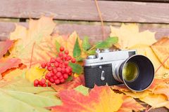 在木长凳的老照相机与秋叶和花揪 图库摄影