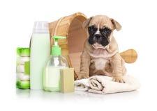 在木面盆的小狗 免版税库存照片