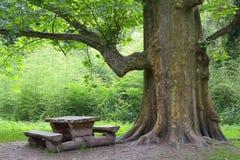 在木头之下的长凳结构树 库存照片