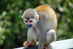 在木头供以座位的小的猴子 库存照片