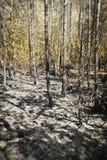 在木头垂直的灰 免版税库存照片