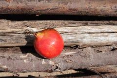 在木头安置的石榴 库存照片